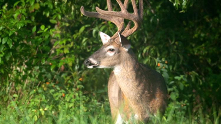 Fort Rucker Big Buck Contest