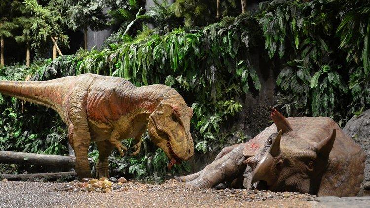 Gondwana Dinosaur Museum