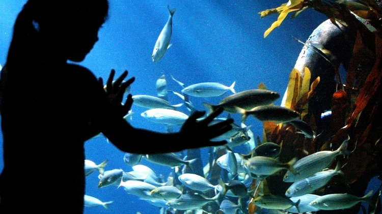 Speyer and Sea Life Aquarium